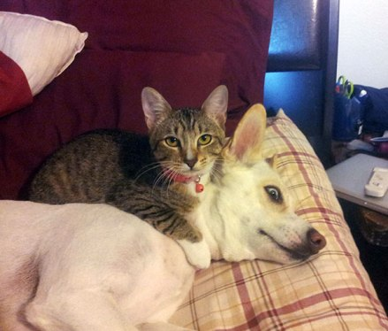 cute-cats-sleeping-on-dogs-18__605